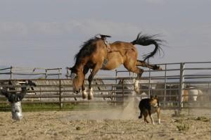 4.28.15 Dog & Pony